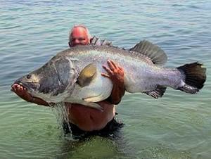 Angelreviere s dfrankreich for Welche fische im teich